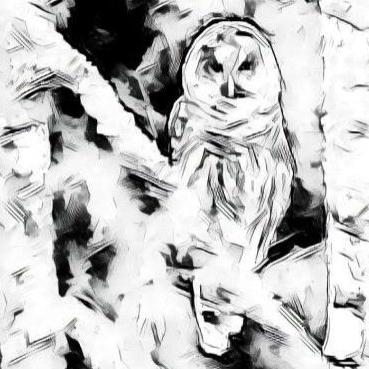 owl-profile