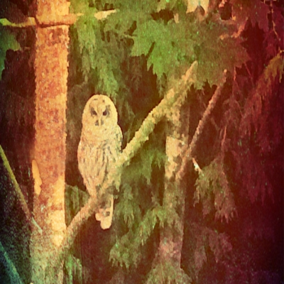 owl-fall-color-square