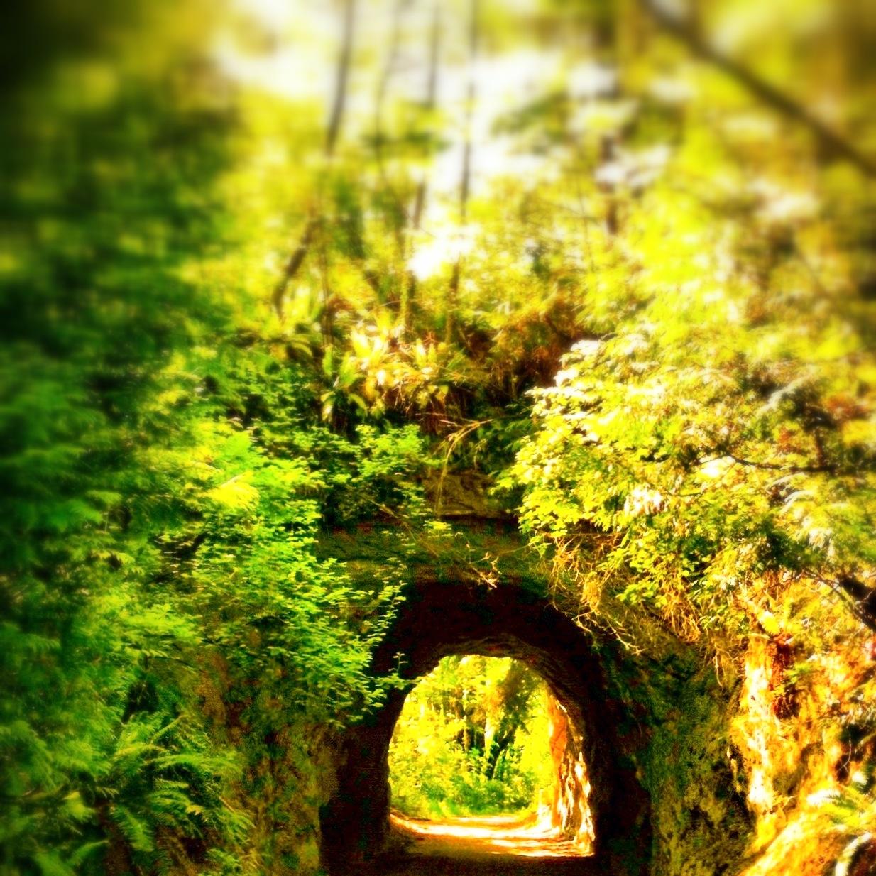 sehome-arboretum